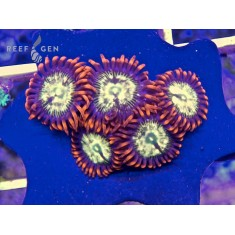 Blonde Steal Your Soul Zoas